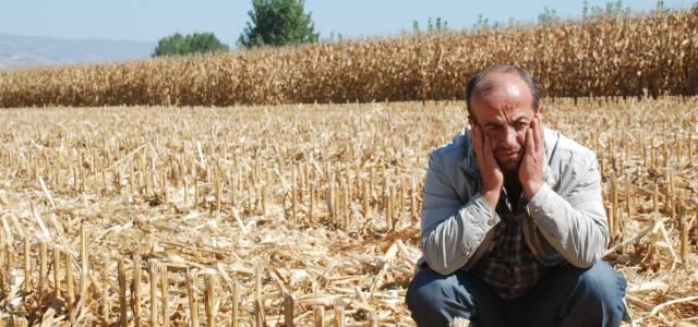 19 ton mısırı biçerek çalan hırsızlar yakalandı.