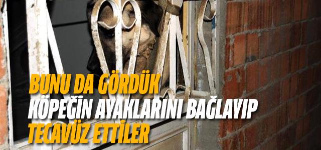 1 Yaşındaki Sivas Kangalı 'Kontes'in Ayaklarını Bağlayıp Tecavüz Ettiler!