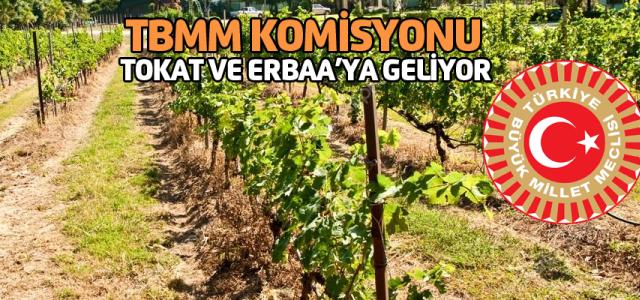 Tokat ve Erbaa'da üzüm üreticilerinin sorunları araştırılacak