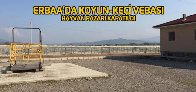 Erbaa'da koyun-keçi vebası karantinası