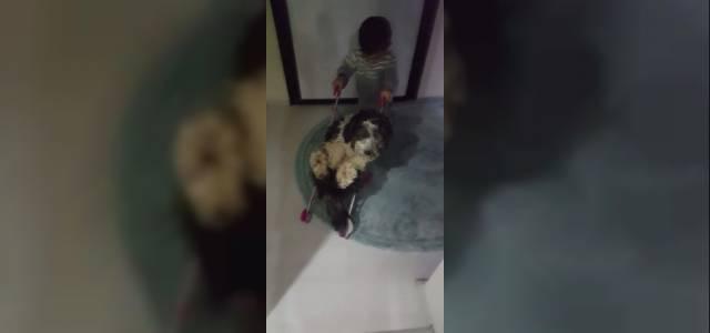 Minik Kuzey, Bebek Arabasındaki Köpeği Gezdirdi