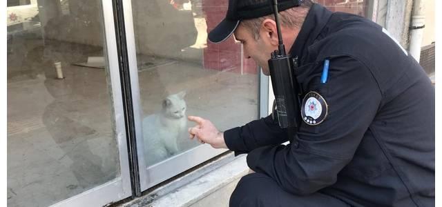 Dükkanda Mahsur Kalan Kedi İçin Kurtarma Operasyonu