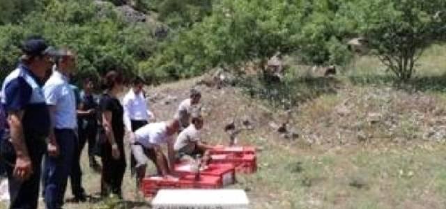 Tokat'ta 3 bin keklik doğaya salındı