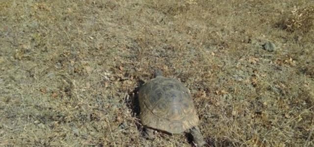 Kaplumbağalar Yanmaktan Son Anda Kurtarıldı