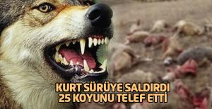 Tokat'ta Sürüye Saldıran Kurt, 25 Koyunu Telef Etti
