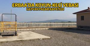 Erbaa#039;da koyun-keçi vebası karantinası