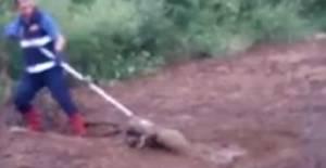 Bataklığa saplanan köpeği itfaiye kurtardı