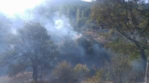 Samanlıkta çıkan yangın ormana sıçradı