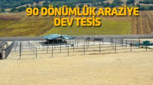 Tokat'a Bölgenin En Büyük Besi Çiftliği Kuruldu