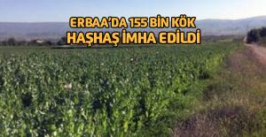Erbaa'da 155 Bin Kök Kaçak Ekilen Haşhaş Bitkisi Ele Geçirildi