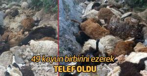 49 Koyun Birbirini Ezerek Telef Oldu!