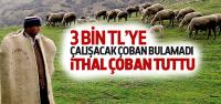 3 Bin TL'ye Çalışacak Çoban Bulamadı!