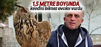 Erbaa'da 1,5 Metrelik Yaralı Baykuş Bulundu