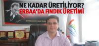 Erbaa'da 22 Bin Dekar Alanda Fındık Üretimi