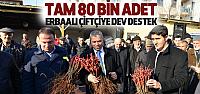 Erbaa'da Çiftçilere 80 Bin Bağ Çubuğu Dağıtıldı