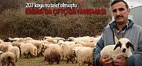 Erbaa'da Koyunları Telef Olan Çiftçiye Destek