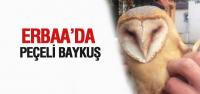 Erbaa'da Yaralı Peçeli Baykuş Bulundu