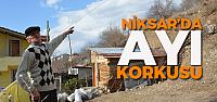 Niksar'da mahalleliyi ayı korkusu sardı