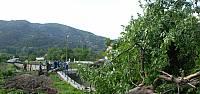 Yol çalışması için meyve ağaçlarının kesilmesine tepki