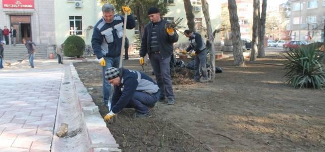 Turhal Hükümet konağı bahçesine bin 500 gül dikilecek