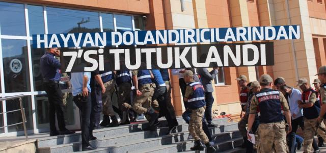 Tokat'ta hayvan dolandırıcılığı operasyonu: 7 tutuklama