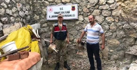 Turhal'da Hayvan Çalan 3 Kişi Tutuklandı