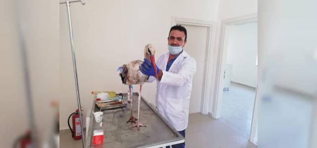 Yaralı leylek tedavi altına alındı
