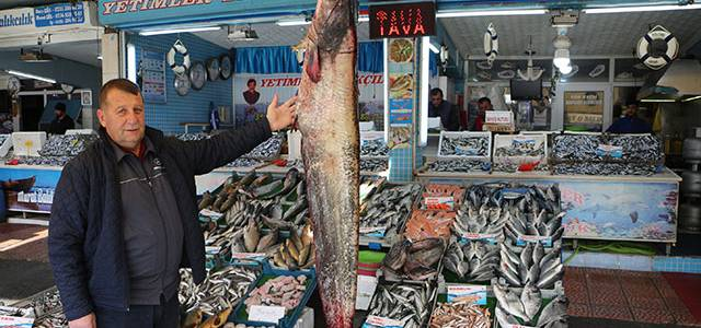 Tokat'ta 2 metrelik yayın balığı yakalandı