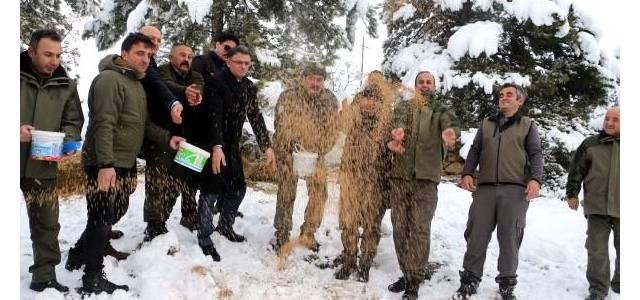 Tokat'ta yaban hayvanları için doğaya 5 ton yem bırakıldı