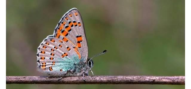 6 yılda çektikleri kelebek fotoğrafları kitapta toplandı