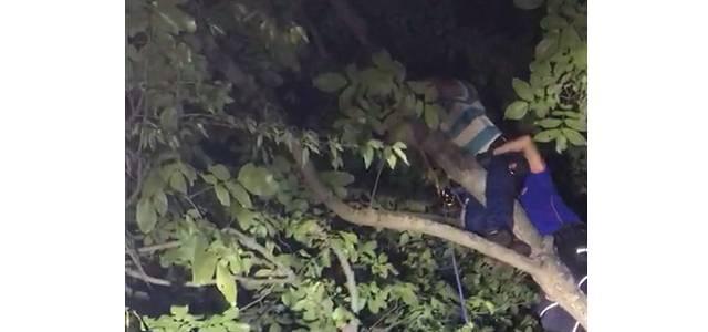 Niksar'da Ceviz toplamak için çıktığı ağaçta mahsur kaldı