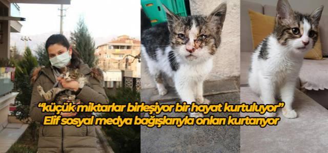 Elif, bağışlarla sokak kedilerini tedavi ettiriyor