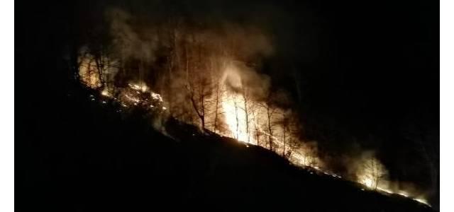 Erbaa'da orman yangını, 7 saatte söndürüldü; 50 dönüm alan kül oldu