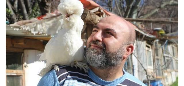 Osmanlı Sultan cinsi tavuklar, hobicilerin gözdesi