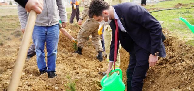 Erbaa'da sağlık çalışanları için 2 bin fidan