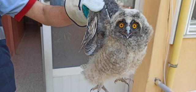 Havalandırma boşluğuna düşen baykuşu itfaiye kurtardı