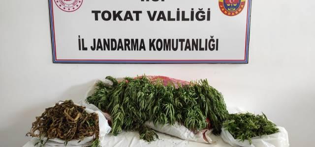 Erbaa ve Niksar'da uyuşturucu operasyonu