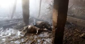 Pazar'da çıkan yangında 48 hayvan telef oldu
