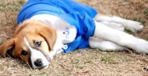 Öğrencilerin sevgilisi 'Fındık' isimli köpekten üzücü haber! Karantinaya alındı