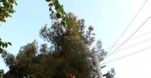 Bahçeye ektiği su kabağı, elektrik...