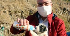 Çöplükteki 9 yavru köpeğe, hayvansever 2 arkadaş sahip çıktı