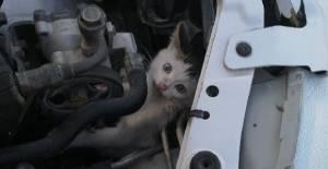 Aracın motoruna giren kediyi itfaiye kurtardı
