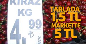 Kiraz tarlada 1 buçuk liraya, marketlerde 5 liradan satılıyor.
