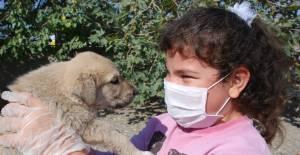 Öğrenciler yavru köpekleri doyasıya sevdi