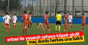 Maç Sırasında Sahaya Giren Köpek, Oyunu Durdurdu