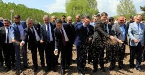 Tokat'ta kenevir ekimi yapıldı