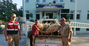 Erbaa'da hayvan hırsızlığı