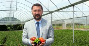 Turhal Belediyesi, sebze ihtiyaçlarını kendi serasından karşılıyor