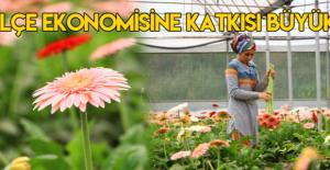 Erbaa'da üretilen kesme çiçekler, Türkiye'nin dört bir yanına gönderiliyor
