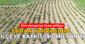 Erbaa yaprağının ilçeye katkısı yıllık 90 milyon TL